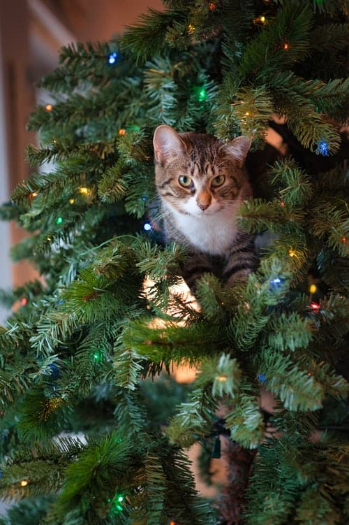 Cat in Christmas tree | Christmas Gifts For Cat Lovers